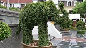 Buchsbaum Schneiden Formen : buchsbaum formschnitt kugeln und figuren schneiden topiary ~ A.2002-acura-tl-radio.info Haus und Dekorationen