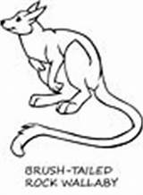 Wallaby Coloring Pages Animals Town sketch template
