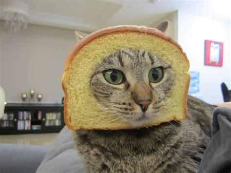 Gayle Tales In Bread Meme