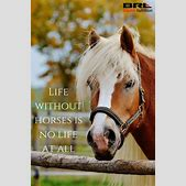Best 25+ Horse ...