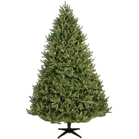 noble fir prelit tree christmas lights