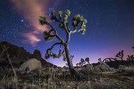 Joshua Tree National Park Night