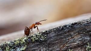 Hausmittel Gegen Ameisen Im Garten : was tun bei ameisen im garten ~ Whattoseeinmadrid.com Haus und Dekorationen
