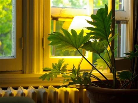 plante verte interieur ombre 28 images awesome plante d interieur d ombre 9 plante verte