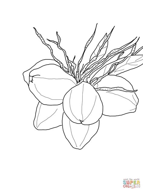 pin coloring page coconut tree img   pinterest