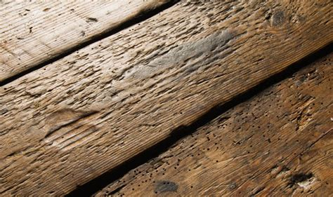 woodworm treatment signs