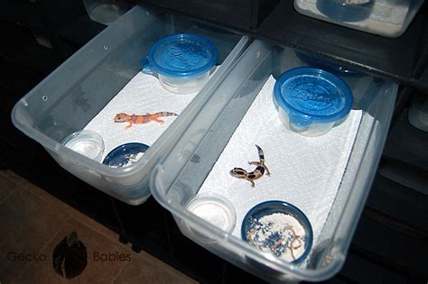 Crested Gecko Shed Box by Gecko Babies Facility