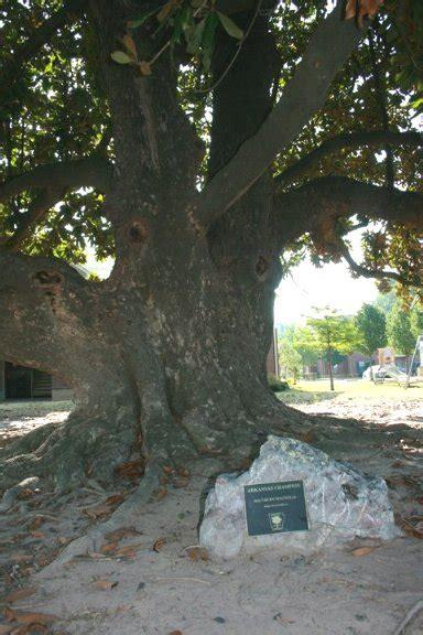 Arkansas' largest Magnolia tree ... is in Texarkana ...