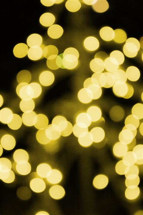 gold christmas lights picture  photograph