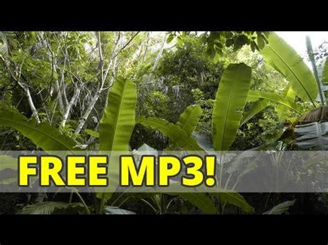 tropical jungle sound effects subtle nature sound