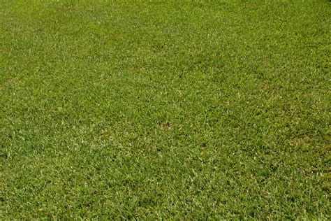 grass seed lawn repair can yellow sod that is newly laid recover home guides
