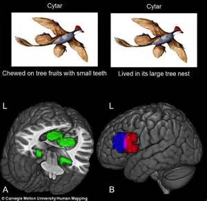 Brain scans show where we store information and scientists ...
