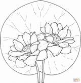 Coloring Lily Flower Pad Water Popular sketch template