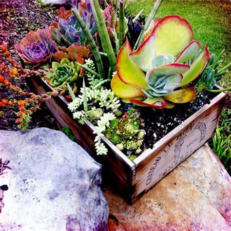 amazing ideas  repurposed succulent planters