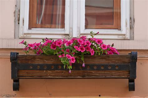 รูปภาพฟรี: กระถางดอกไม้, ไม้, ธรณีประตู, ไม้, เฮ้าส์, ตกแต่ง, ดอกไม้, หน้าต่าง, สถาปัตยกรรม, เก่า