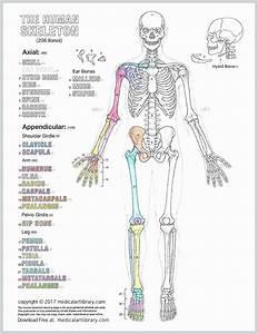 Human Anatomy Drawing Book Pdf Free Download In 2020
