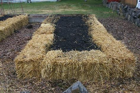 straw bale garden straw bale gardening one hundred dollars a month