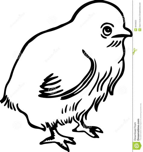 chick stock vector illustration   illustration