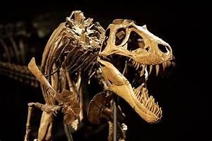 Rockford Museum Gets Another Load Of Dinosaur Bones