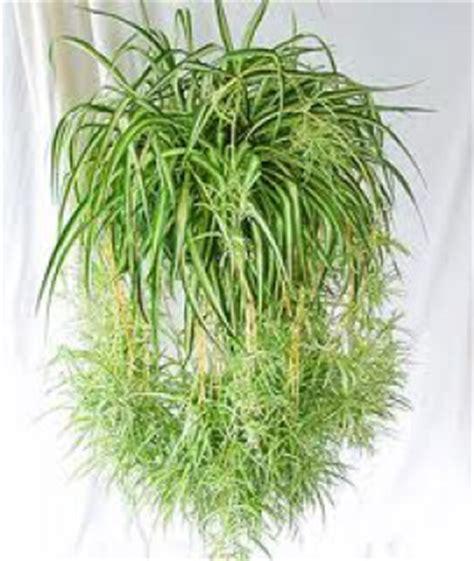 deco salle de bain fleurs tombantes aux plantes d 39 int 233 rieur