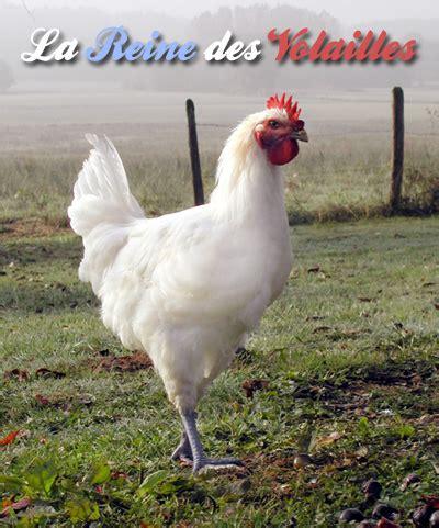 cuisiner une poularde dégustez la reine des volailles vente de poulet de bresse aoc chapon poularde volaille de