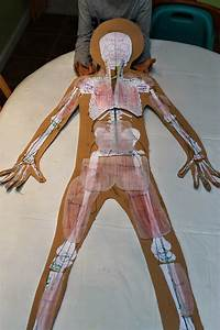 You Want To Learn About What    Human Anatomy
