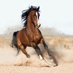 Horses images Beautiful horses wallpaper and background ...