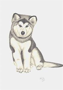 Husky Dog Drawings In Pencil