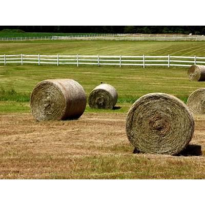 Myth: Don't Feed Horses Round Bales