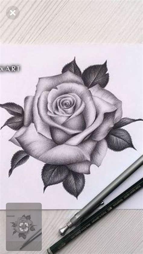draw rose draw rose draw rose