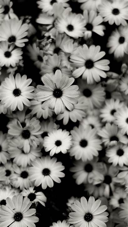 Flowers Grey Daisies Iphone Background Se Parallax
