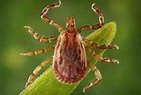 Rocky Mountain Spotted Fever: See Photos of the Rash