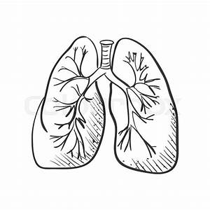 Lungs Doodle Drawing  Medical