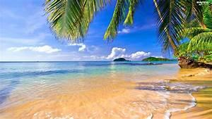 Islands, Tropical, sea, Palms, Beaches
