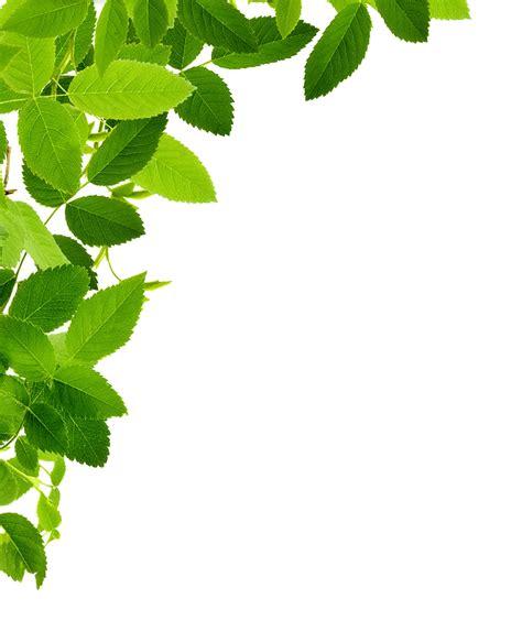 framing leaves leaves left corner transparent png stickpng