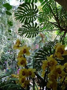 Exposition mille et une orchidees grande serre du jardin for Exposition jardin des plantes