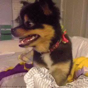 so happy and so cute GIF - dog smiling happy GIFs   Say ...