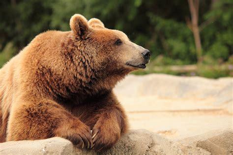 Do Bears Really Like Honey?