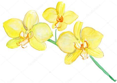 immagini fiori orchidee fiori di orchidee illustrazione ad acquerello foto