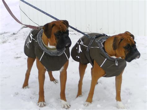 sweaters for boxer dogs clothes for boxer dogs photo 1 dress the clothes