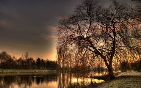 Weeping Animated Wallpaper - weeping willow wallpapers wallpaper cave