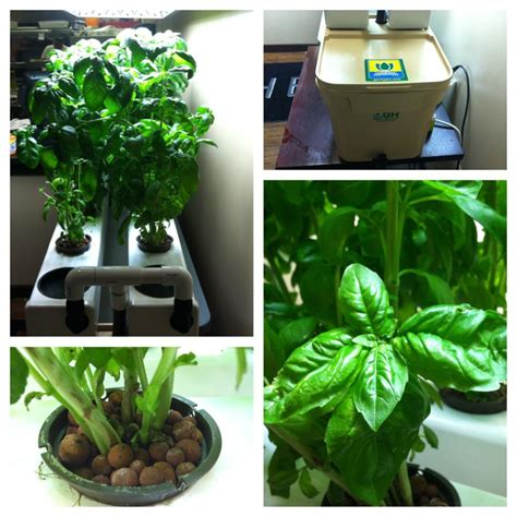 hydroponic herb garden check out our hydroponic herb garden the living room