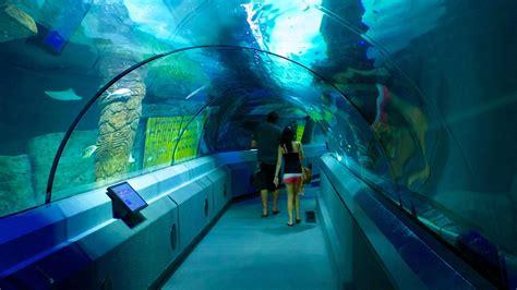 sea aquarium underwater world unterwasserwelt sea mooloolaba expedia at
