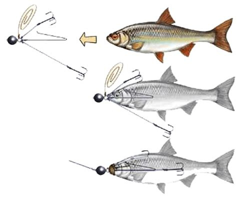 comment cuisiner un sandre pêche des carnassiers