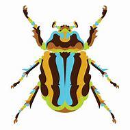 Scarab Beetle Pattern