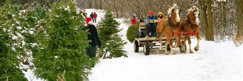 ctfo christmas tree farmers of ontario consumer