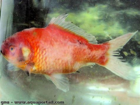 poisson aquarium alimentation reproduction