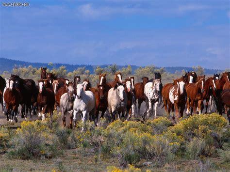 herd horses animals horse mustang wild mustangs