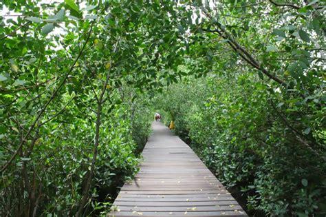 wisata alam hutan mangrove wonorejo surabaya airy rooms blog