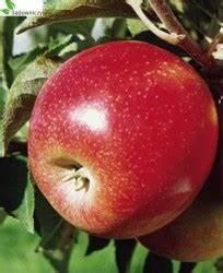 Wann Apfelbäume Schneiden : apfel jonagold decosta ~ Lizthompson.info Haus und Dekorationen